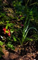 Plant shadows HDR by Mackingster
