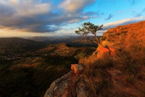 1000 hills and a Tree Wider angle by carlosthe