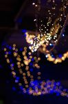 Fairy Lights by MarkKenworthy