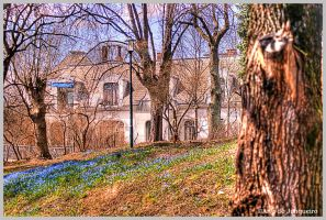 Northern Spring by Arte-de-Junqueiro