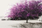 Purple Trees by mandylou81