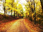 Joy and Glories Road by GriffinsJoy