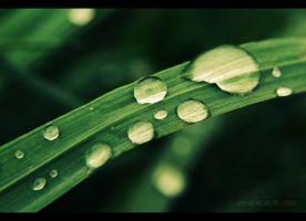 drops and grass. by aprylle0497