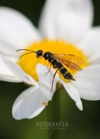 Insect on a flower by esecret
