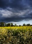Fields of Gold by Eisley77