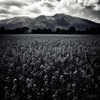 The Land Of Flowers by LuGiais