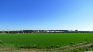 Rice fields in Portugal by biffexploder