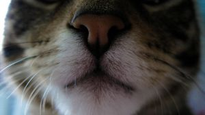 Kitten nose by TortueBulle