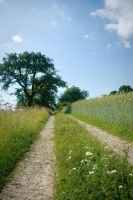Country track in barley field by steppelandstock