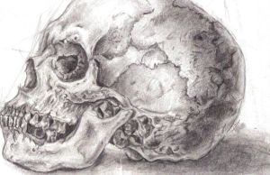 Skull by SnoozieBear