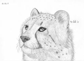 Cheetah baby by airforlife2011