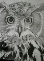 Owl Portrait by wolfinu