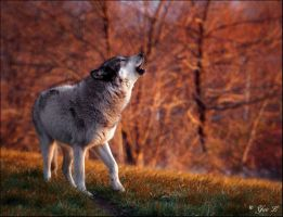 howl at sundown by Yair-Leibovich