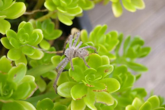 spider that sat on a plant by vjs