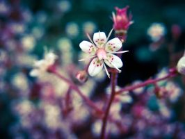 Cherry blossom by EmiFy