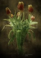 Tulips by Phat-Set