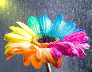 http://th07.deviantart.net/fs12/300W/i/2006/286/4/2/Happy_Gerbera_Rainbow_Wet_by_HappyRoses.jpg