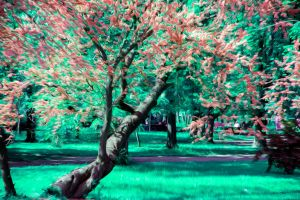 Abstract Tree Oil Paint Style by Th3R3v3nan7