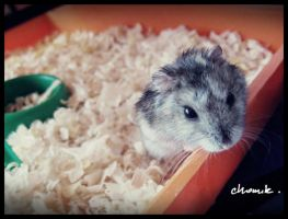 MY HAMSTER by erderAKArbk