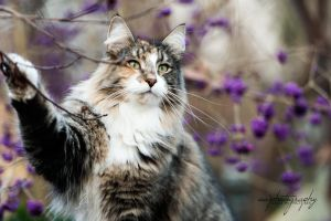 forest cat by awphotoart