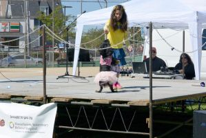 2014 Dog Festival, Best Trick Contest 5 by Miss-Tbones