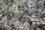 Camouflaged spider by shooric