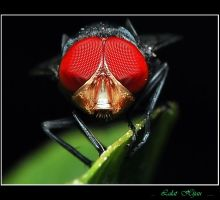 RED EYES by rinadi