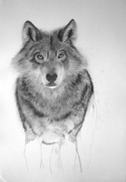 Wolf - WIP 3 by bm23