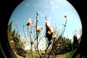 Fisheye Flower by alltheantics