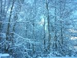 snowy forest by Hanny-93