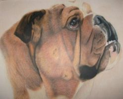 Bulldog by misstressalice