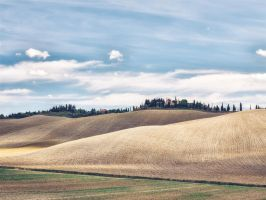 background - arable - summer - tuscany by 8moments