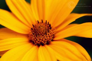 Flower 6 by crystalcleargfx