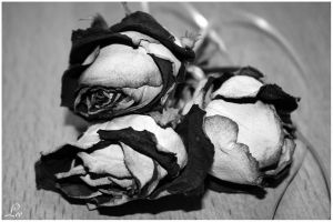 Black Roses by LikaTheSheep