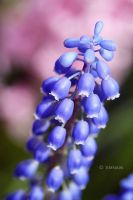 Natures Bells by Emnais
