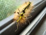 caterpillar on screen by kytrale