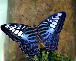 Butterfly 5 by MikeMc001