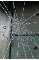 Web perfection by niksi13