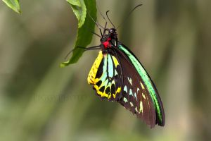 Butterfully beautiful by piggyphoto