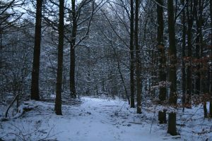 Stock background snow forest VII by MariKariS