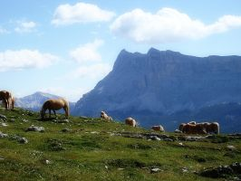 Horses in the Dolomites by lailalta