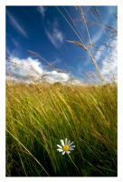 lost beauty by one-shot-below