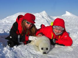 Harp seal pup and us by Splikk