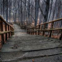 wooden stairs by Willowhisperer