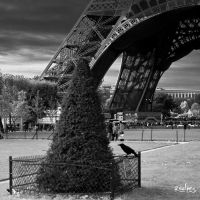 Le corbeau by rdalpes