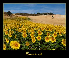 Busca tu sol... by disalicia