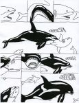 Orca Vore by Strega by Stonegate
