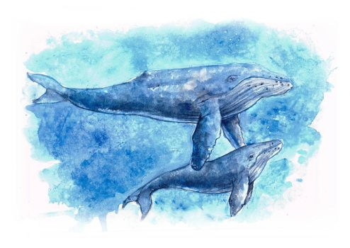 Whales by Anhyra