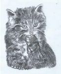 Cat #2 Birthday Card - Charcoal by abolatinge
