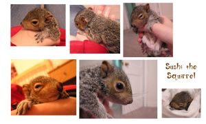 Sushi the Squirrel by MiniLeiProductions